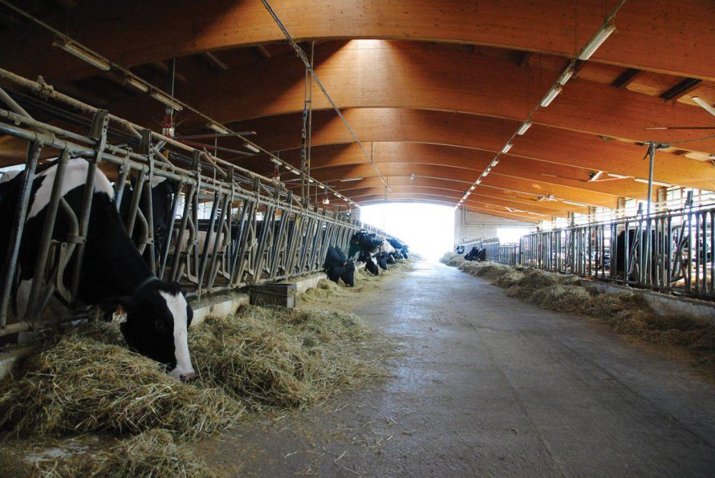 Il rischio biologico nel settore agro-zootecnico e forestale